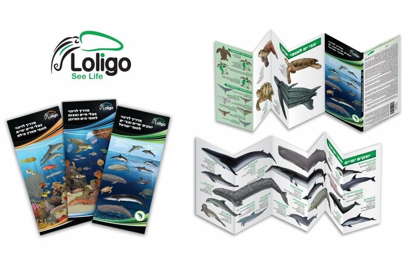 מדריך לזיהוי בעלי חיים ימיים לחופי מפרץ אילת