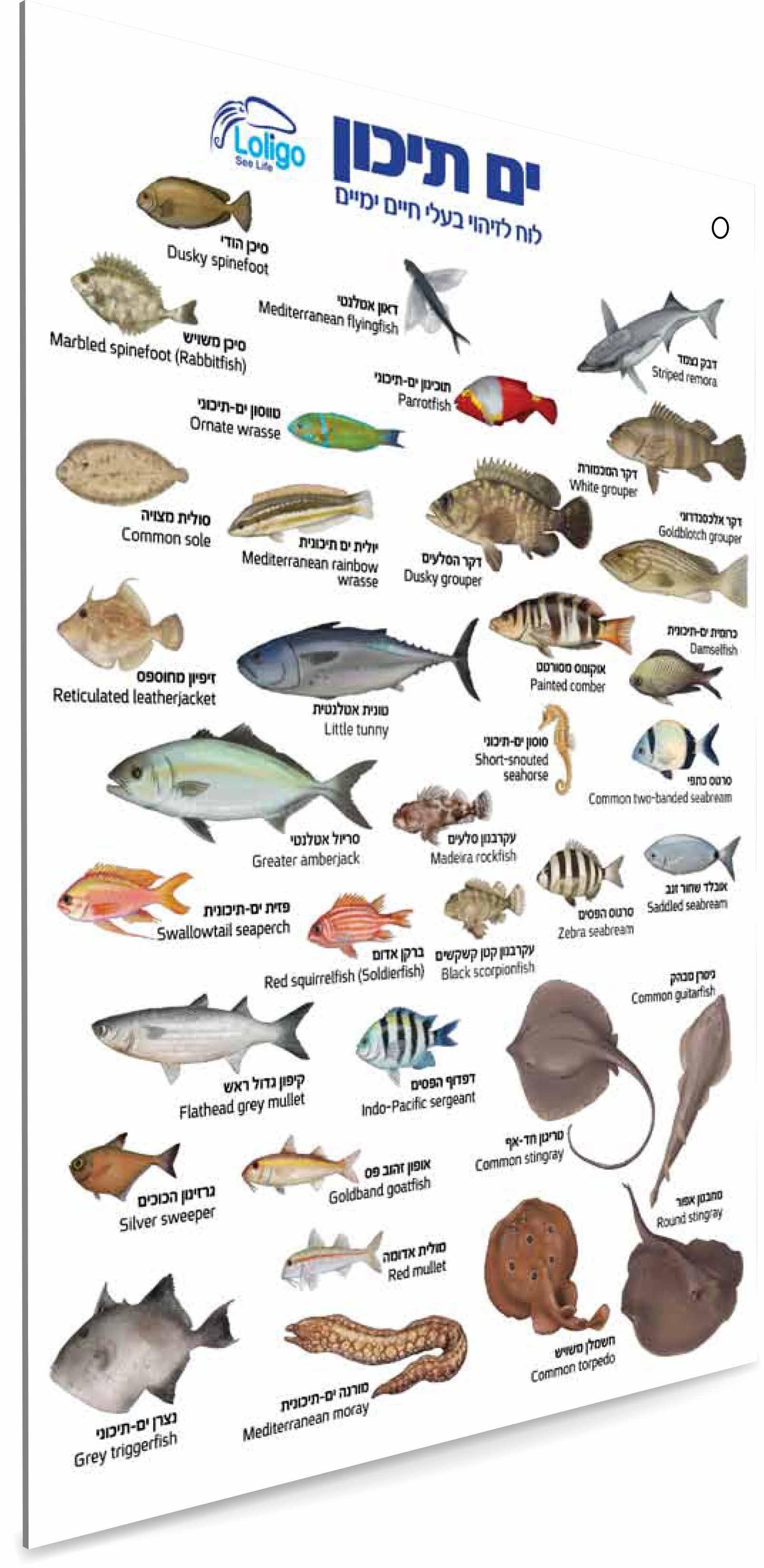 מדריך תת-ימי לזיהוי בעלי חיים בים התיכון