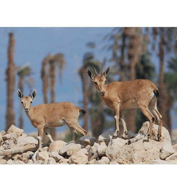 נוף וטבע בנווה עין גדי - אריאל 191