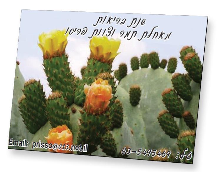 כרטיסי ביקור ממגנטים | פרסום מגנטים
