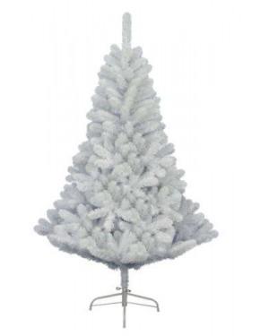 עץ אשוח לבן במגוון מידות