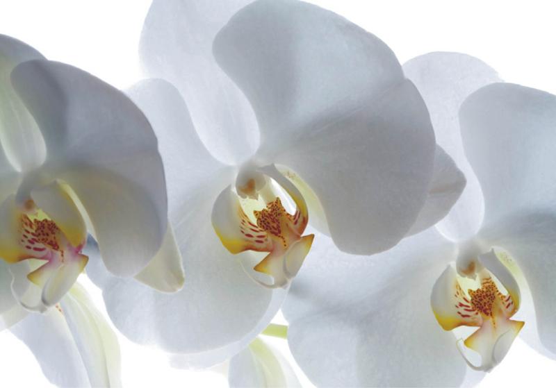 תמונת טפט לקיר - פרחים לבנים