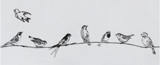 מדבקת קיר - ציפורים