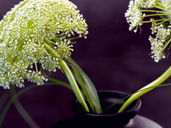 תמונת טפט פרחים באגרטל