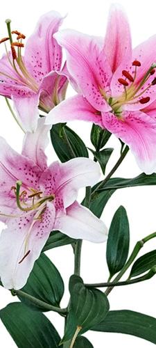 תמונת טפט - פרחים