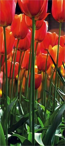 תמונת טפט של צבעונים