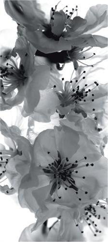 תמונת טפט של פרחים בשחור ולבן