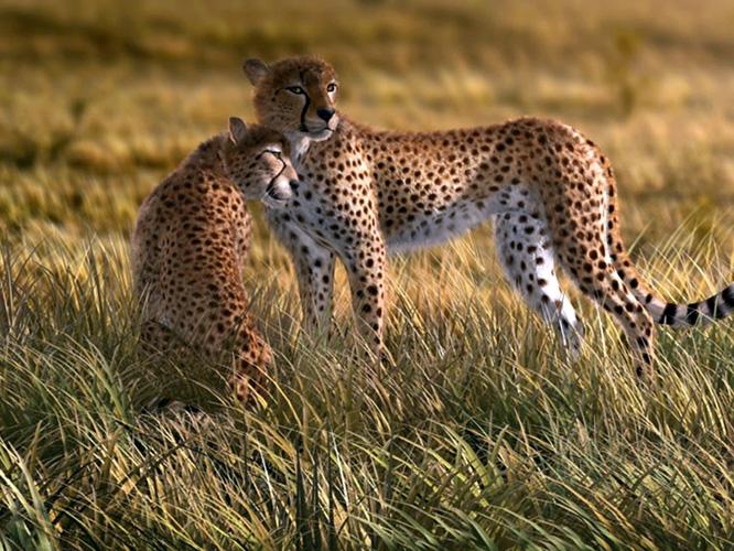 תמונת טפט נמרים - Tigers