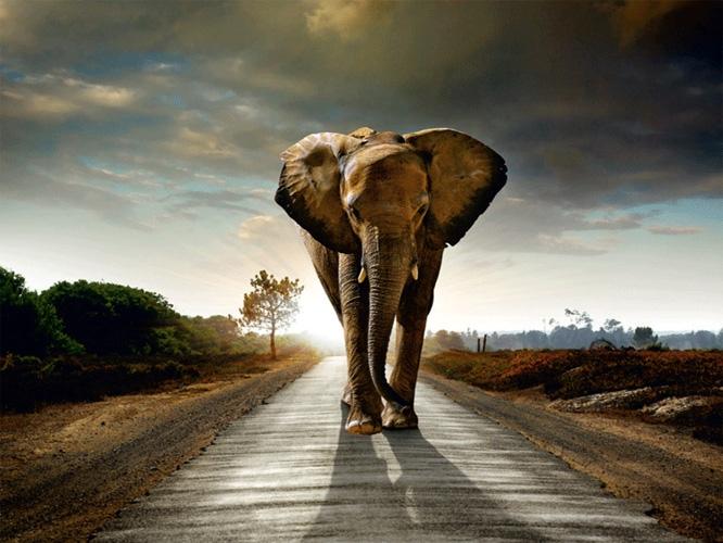 תמונת טפט פיל - Elephant