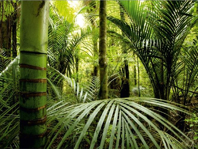 תמונת טפט יער - Jungle