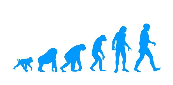 מדבקת קיר evolution