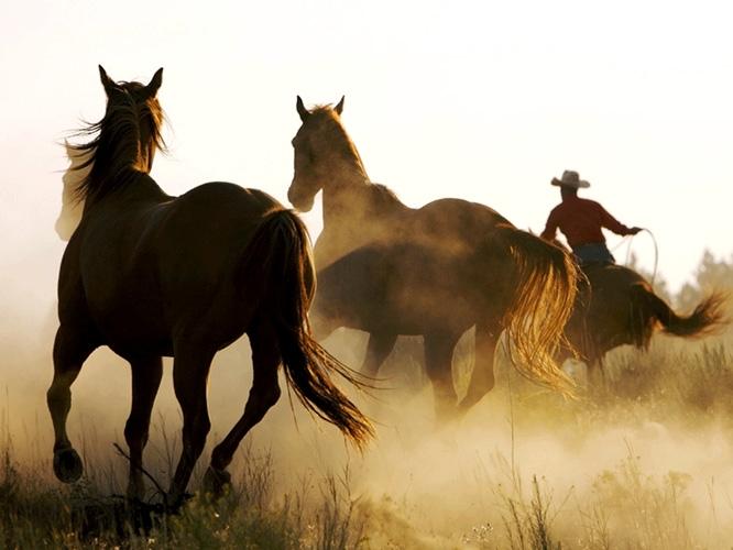 תמונת טפט סוסי פרא - Horses in the Wild