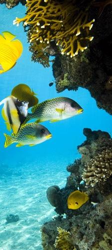 תמונת טפט מעמקי הים - The Deep Sea