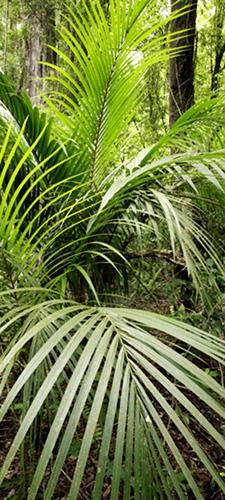 תמונת טפט ג'ונגל - Jungle