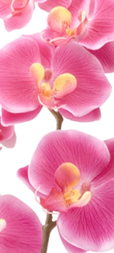 תמונת טפט פרחים - Flowers