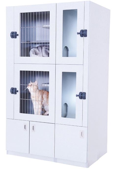 חתוליה למינציה