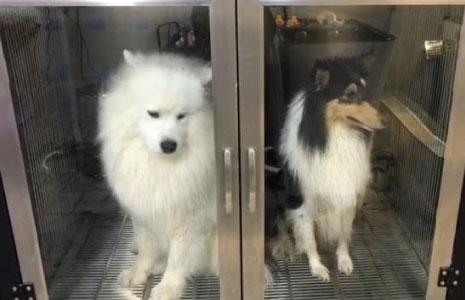מתקן ייבוש כלבים גדול