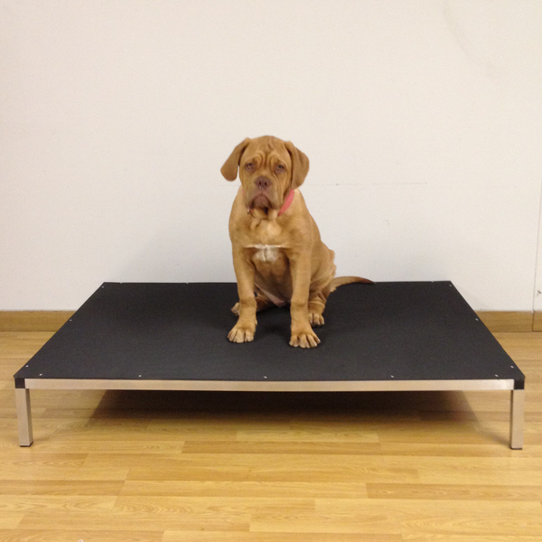 דרגש מיטה לכלב מ נרוסטה טופ אוקולון