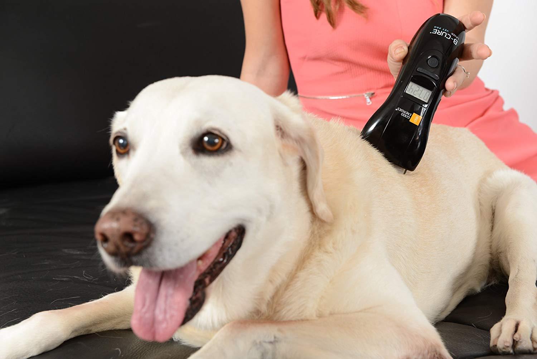 בי קיור לייזר וטרינרי b cure laser vet