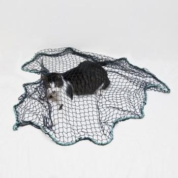 רשת זריקה לחתולים