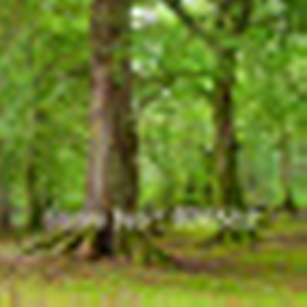 רקע מודפס-יער2