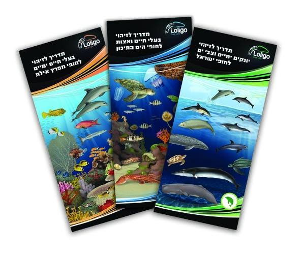 מדריך לזיהוי יונקים ימיים וצבי ים לחופי ישראל