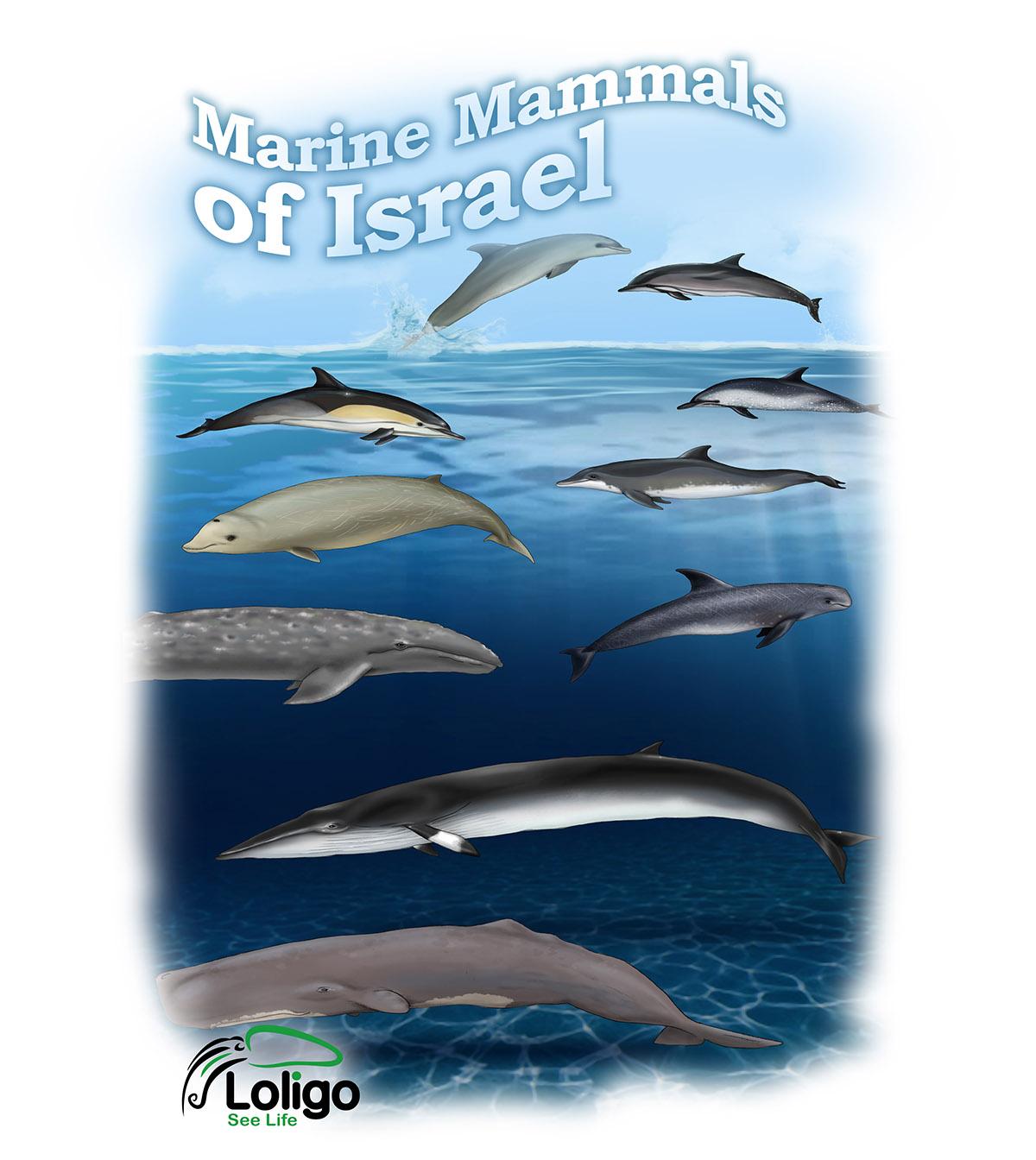 חולצת לוליגו - יונקים ימיים