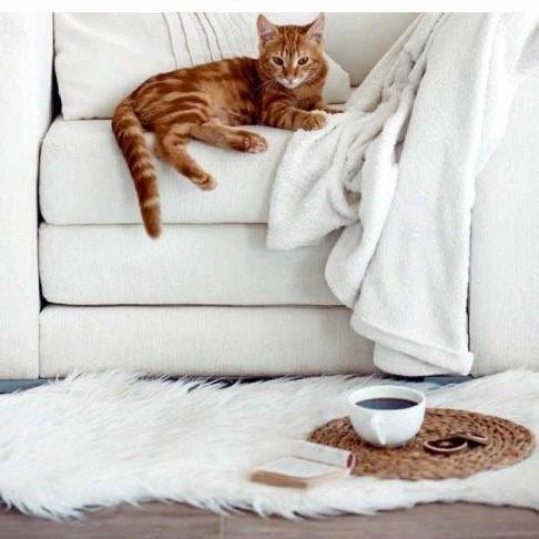 שטיח לחדר ילדים פרוותי דגם ונסה