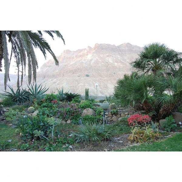 פרח בר במדבר - אריאל 186